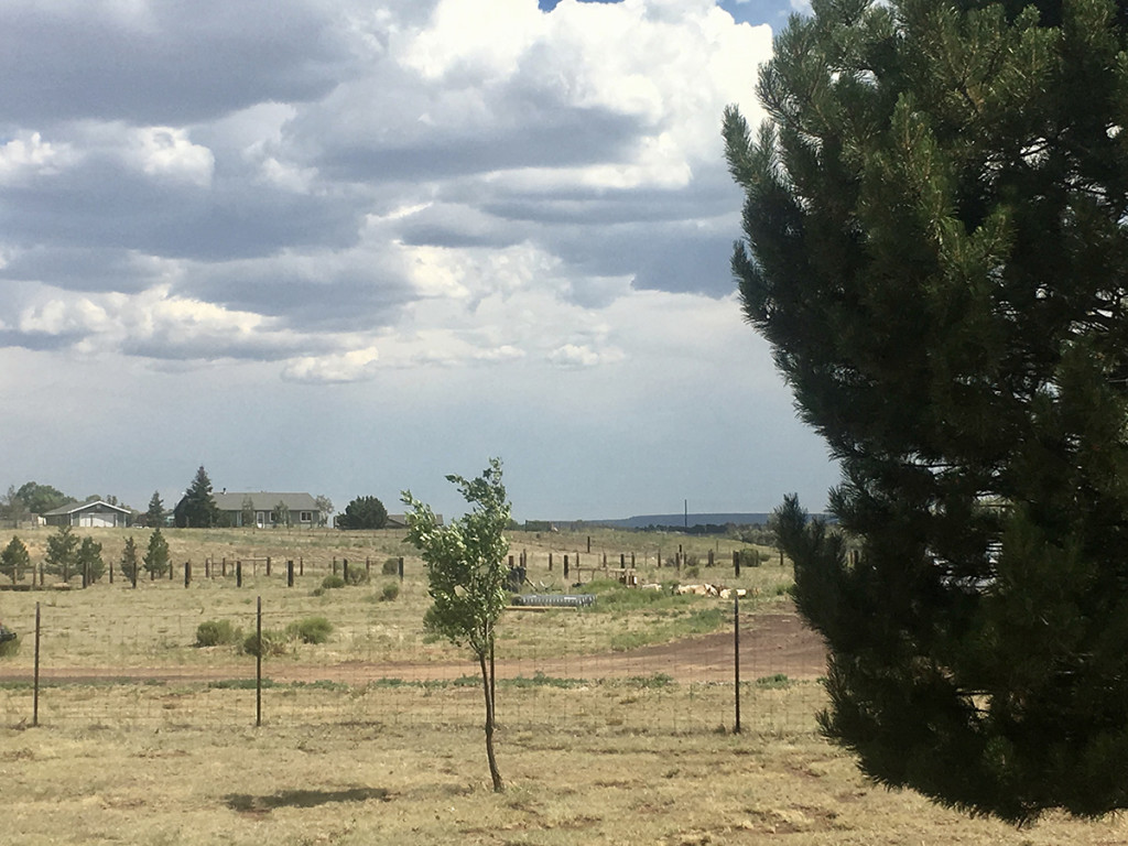 home on acreage in flagstaff